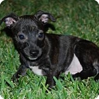 Adopt A Pet :: Penelope - New Milford, CT