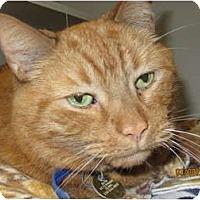Adopt A Pet :: Sanford - Richfield, OH