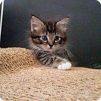 Adopt A Pet :: Alice - Ocala, FL