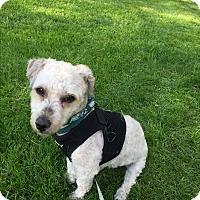 Adopt A Pet :: Carina - Chicago, IL