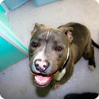 Adopt A Pet :: Wyatt - Eugene, OR