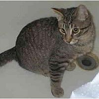 Adopt A Pet :: Otis>^.,.^< $35 adoption - Union Lake, MI