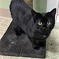 Adopt A Pet :: Raven - Medina, OH