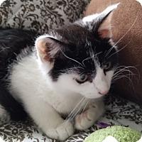 Adopt A Pet :: Aspen - Staten Island, NY