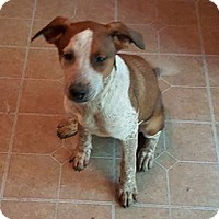 Adopt A Pet :: Sassy - New Middletown, OH