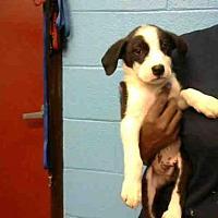 Adopt A Pet :: PANDA - Atlanta, GA