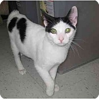 Adopt A Pet :: Spike - Jenkintown, PA
