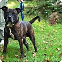 Adopt A Pet :: Hogan - WARREN, OH