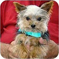 Adopt A Pet :: Ritzy - Tallahassee, FL