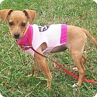 Adopt A Pet :: Evangeline - Nashville, TN
