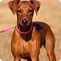 Adopt A Pet :: Roxy - Dacula, GA