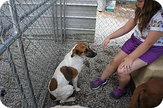 Hound (Unknown Type) Mix Puppy for adoption in Henderson, North Carolina - Sam