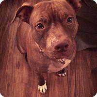 Adopt A Pet :: Rosie - Livermore, CA