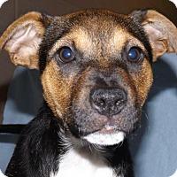 Adopt A Pet :: Ripley - Oxford, MS