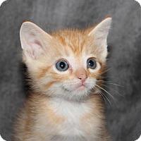 Adopt A Pet :: Mo - Helotes, TX