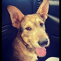 Adopt A Pet :: Kyle - Grand Bay, AL