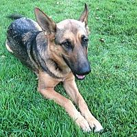 Adopt A Pet :: Shelby Ann - Bergheim, TX