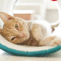 Adopt A Pet :: Quiggle - Chicago, IL