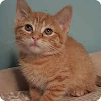 Adopt A Pet :: Buttercup - Highland, IN