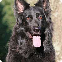 Adopt A Pet :: Ranger - Nashville, TN