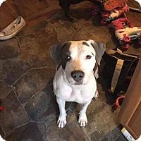 Adopt A Pet :: Chia - Broken Arrow, OK