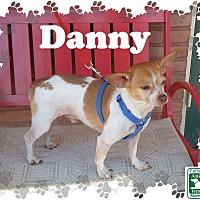 Adopt A Pet :: Danny - Fallston, MD