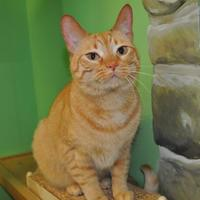 Adopt A Pet :: Molly - Suwanee, GA