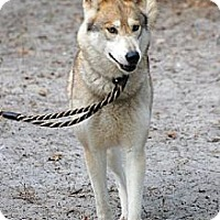 Adopt A Pet :: Aspen - Orlando, FL