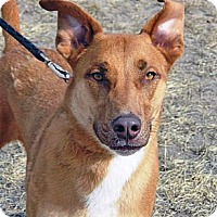 Adopt A Pet :: Raja - Cheyenne, WY