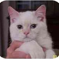 Adopt A Pet :: Laci & Luke - Arlington, VA