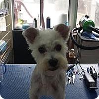Adopt A Pet :: Mallory - Crystal River, FL