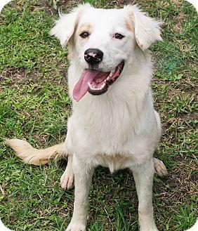 Border Collie Mix Dog for adoption in Savannah, Georgia - Baby