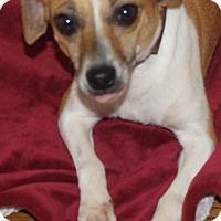 Adopt A Pet :: Flicka - Chapel Hill, NC