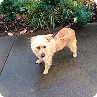 Adopt A Pet :: REBECCA LYNN - Raleigh, NC