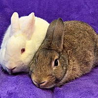 Adopt A Pet :: Casper and Bambi - Lewisville, TX