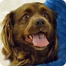 Adopt A Pet :: Brownie