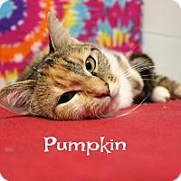 Adopt A Pet :: Pumpkin - Melbourne, KY