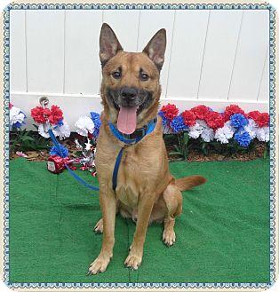 Shepherd (Unknown Type) Mix Dog for adoption in Marietta, Georgia - ELLIS