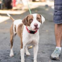 Adopt A Pet :: Birney - Fresno CA, CA