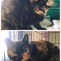 Adopt A Pet :: Cali - Harleysville, PA