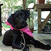 Adopt A Pet :: SISSY - Parsons, TN