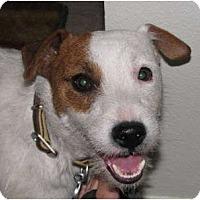 Adopt A Pet :: BAILEY - Scottsdale, AZ