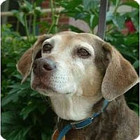 Adopt A Pet :: Brownie (Lila) - Indianapolis, IN