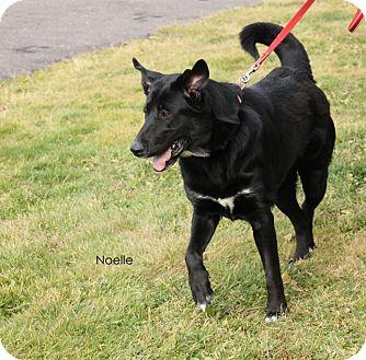 Labrador Retriever Mix Dog for adoption in Hibbing, Minnesota - Noelle