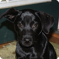 Adopt A Pet :: Edison - in Maine - kennebunkport, ME