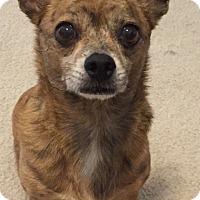 Adopt A Pet :: Tigger - Orlando, FL