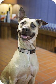 Shepherd (Unknown Type) Mix Dog for adoption in Sterling, Kansas - McKenzie