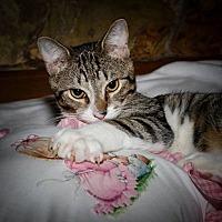 Adopt A Pet :: Mycroft - Plant City, FL