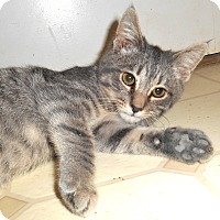 Adopt A Pet :: Bonkers - Chattanooga, TN