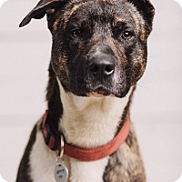Adopt A Pet :: Leon - Portland, OR